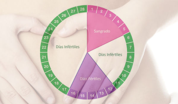 Calendario ciclo de la menstruacion